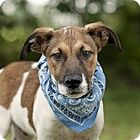 Adopt A Pet :: Dylan-local! - East Hartford, CT