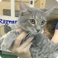 Adopt A Pet :: Ragnar - Chandler, AZ
