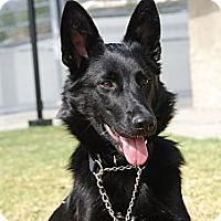 Adopt A Pet :: Orissa - Laguna Niguel, CA
