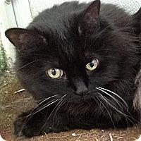 Adopt A Pet :: Foxy - Deerfield Beach, FL
