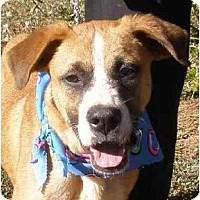 Adopt A Pet :: Sailor - Alexandria, VA