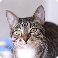 Adopt A Pet :: Stormborn - Chicago, IL