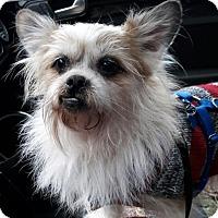 Adopt A Pet :: Nuge - Salem, OR