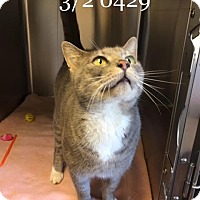 Adopt A Pet :: Bartemius - McDonough, GA