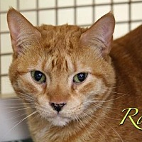 Adopt A Pet :: Rocky 11002 - Richardson, TX