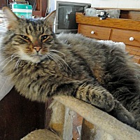 Adopt A Pet :: Danny - St. Johnsville, NY