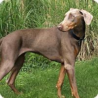 Adopt A Pet :: Izellah - Bristolville, OH