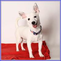 Adopt A Pet :: Juicebox - Glendale, AZ