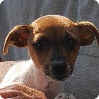 Adopt A Pet :: Jenny - Colonial Heights, VA