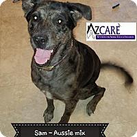 Adopt A Pet :: Sam - San Tan Valley, AZ