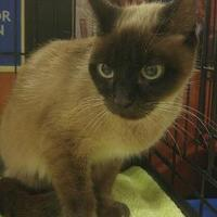 Adopt A Pet :: MADRE - Powder Springs, GA