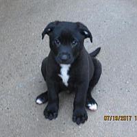 Adopt A Pet :: BONO - Williston Park, NY