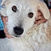 Adopt A Pet :: Kallie - San Diego, CA