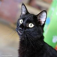 Adopt A Pet :: Trickster - Tucson, AZ