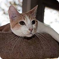 Adopt A Pet :: Dakota - New Port Richey, FL
