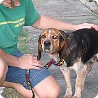 Adopt A Pet :: Barney- COURTESY POSTING - Crystal River, FL