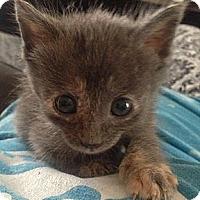 Adopt A Pet :: Chip - Shreveport, LA