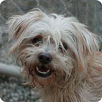 Adopt A Pet :: Lance - Canoga Park, CA
