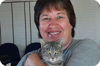 Domestic Shorthair Kitten for adoption in Elyria, Ohio - Perch