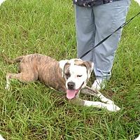 Adopt A Pet :: Pam - Miami Beach, FL