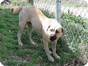 Boxer Mix Dog for adoption in Wetumpka, Alabama - #80382'Shelby'