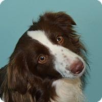 Adopt A Pet :: Kera - Prole, IA