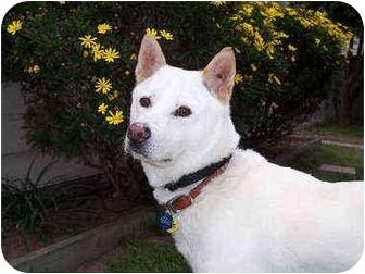 Jindo/Shiba Inu Mix Dog for adoption in Southern California, California - Kkandori