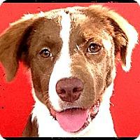 Adopt A Pet :: Cutty - Austin, TX