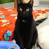 Adopt A Pet :: Ella - Lafayette, NJ