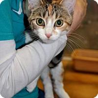 Adopt A Pet :: Sandie - Northbrook, IL