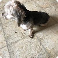 Adopt A Pet :: Cjua - Treton, ON