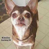 Adopt A Pet :: KINSLEY - Conroe, TX