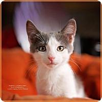 Adopt A Pet :: Jasper - Cincinnati, OH