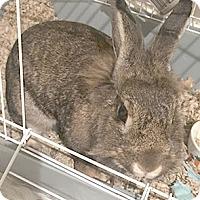 Adopt A Pet :: Hazel - Patterson, NY