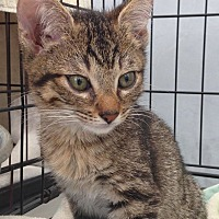Adopt A Pet :: DUDE - Los Angeles, CA