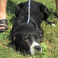 Adopt A Pet :: Peridot - Reeds Spring, MO