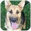 Photo 1 - German Shepherd Dog Mix Puppy for adoption in Inman, South Carolina - Hannah
