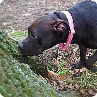 Adopt A Pet :: Josie! - Grafton, OH