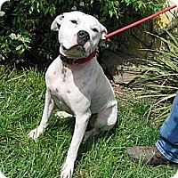 Adopt A Pet :: DASH.handsome young boy - Sacramento, CA