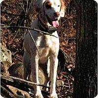 Adopt A Pet :: Chancellory - Columbus, OH