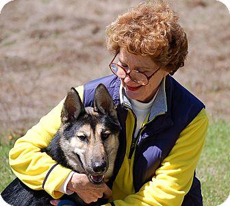 German Shepherd Dog Dog for adoption in Preston, Connecticut - Thor