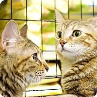 Adopt A Pet :: Carmela - College Station, TX