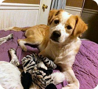 Labrador Retriever/Mixed Breed (Medium) Mix Puppy for adoption in Jacksonville, Florida - Moran