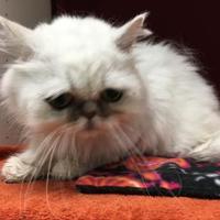 Adopt A Pet :: Gary - Lynnwood, WA