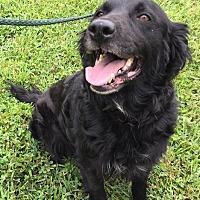Adopt A Pet :: Onyx - Capon Bridge, WV