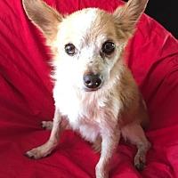 Adopt A Pet :: Little Man - Corona, CA