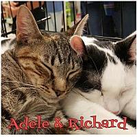 Adopt A Pet :: Adele     171021 - Atlanta, GA