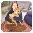 Photo 2 - Shepherd (Unknown Type)/Spitz (Unknown Type, Medium) Mix Dog for adoption in Pittsboro/Durham, North Carolina - Jampa = Love