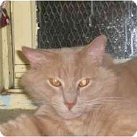 Adopt A Pet :: Ozzy - Lombard, IL