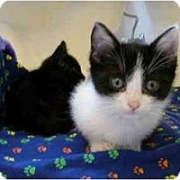 Adopt A Pet :: Savannah - Davis, CA
